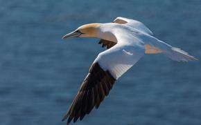 Картинка вода, полет, птица, крылья, чайка