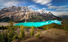 Картинка лес, небо, облака, деревья, горы, озеро, canada, alberta, peyto lake. banff national park