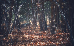 Картинка autumn, leaves, woodland