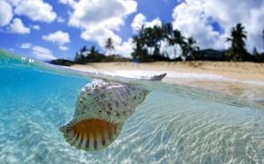 Картинка ocean, Tahiti, shell, floating, blue lagoon, clear water