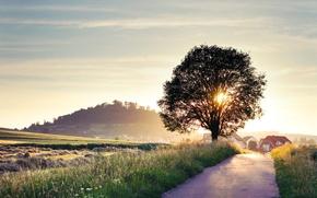 Обои дорога, лето, солнце, лучи, свет, пейзаж, природа, фон, дерево, обои, дома