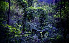 Картинка деревья, ночь, лес, листья