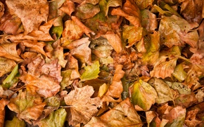 Картинка осень, листья, желтые, опавшие