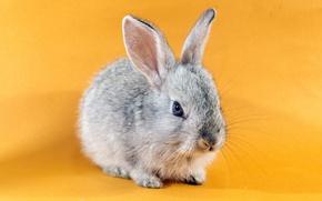 Картинка фон, кролик, зайчик