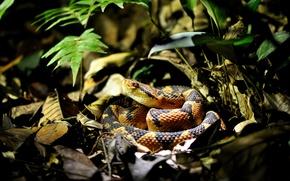 Картинка Snake, Leaves, Florest
