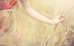Картинка поле, лето, трава, девушка, рука