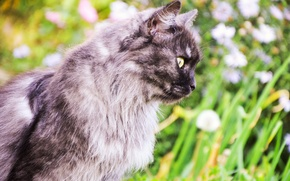 Картинка зелень, животные, лето, кошки, мило, красиво, summer, ярко, photo, cat, animal, nice