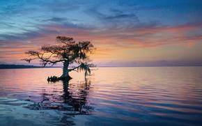 Картинка дерево, утро, Флорида, США, штат, синее кипарисовое озеро