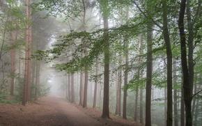 Обои лес, дорога, деревья, туман