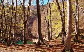 Картинка осень, лес, деревья, озеро, forest, Nature, листопад, trees, water, autumn, leaves