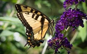 Картинка цветок, бабочка, крылья, красавица, насекомое