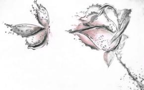 Картинка цветок, бабочка, рисунок, роза, лепестки