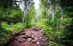 Картинка лес, небо, деревья, камни