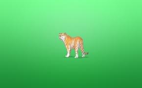 Обои тигр, животное, минимализм, tiger, зеленоватый фон, хитрая морда