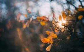 Обои брызги, осень, ветки, природа, свет, листва, макро