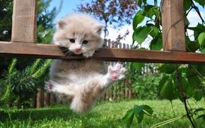 Обои лето, трава, природа, забор, лапы, котёнок