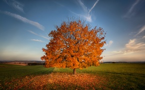 Картинка поле, осень, природа, дерево, листва, поля