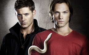Обои winchester, сериал, сэм, supernatural, дин, змея, sam, сверхъестественное, dean, jensen, brothers, ackles, jared, padalecki