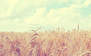Обои пшеница, поле, небо, облака, пейзаж, природа, колосья, sky, field, landscape, nature, clouds, 2560x1600, spikes, wheat