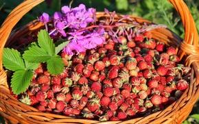 Картинка ягоды, корзина, луговая клубника