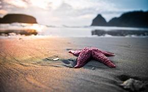 Обои природа, звезда, пляж, песок