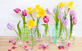 Картинка цветы, желтые, лепестки, тюльпаны, розовые, нарциссы, бутылочки