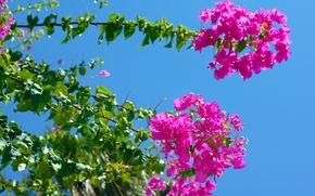 Картинка цветок, небо, листья, дерево
