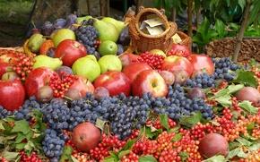 Обои калина, ягоды, урожай, фрукты, груши, сливы, виноград, яблоки