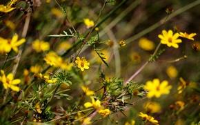Обои цветы, поле, луг, сад, трава, стебель