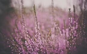Обои цветы, цвет, розовые, тусклость