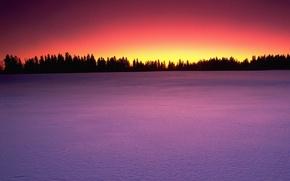 Обои деревья, Снег, закат