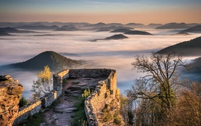 Картинка Fog, Palatinate, Wegelnburg, Sunrise, Ruins, Mist, Castle, Forest, Hills, Mountains