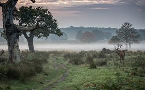 Картинка туман, олень, утро