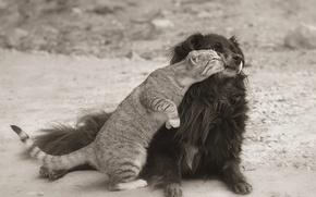 Картинка кошка, улица, пес