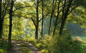 Картинка солнце, тропинка, зелень, Германия, деревья, Бавария, лес
