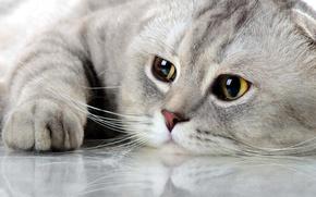 Картинка кот, котёнок, киса