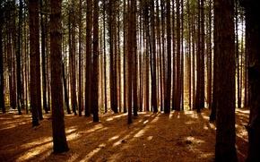 Обои Деревья, свет, лес