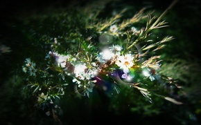 Обои цветы, лучи, солнца, растения, Зелень, листья