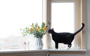 Обои цветы, окно, кот