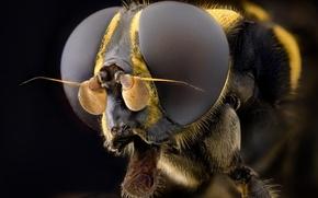 Картинка макро, фон, насекомое