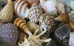 Картинка море, лето, ракушки, раковины