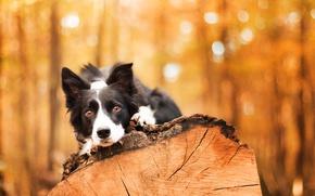 Обои друг, собака, дерево