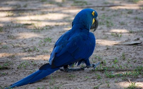Обои перья, краски, хвост, птица, клюв, попугай