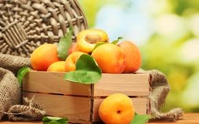Обои apricot, абрикосы, фрукты