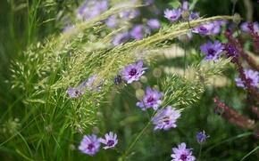 Обои лето, трава, цветы, природа