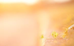 Обои нежность, солнце, цветы, желтый