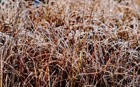 Картинка иней, трава, свет, блеск, утро, мороз