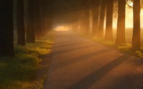 Обои красивые обои, свет, природа, асфальт, деревья, дорога, аллеи, стволы, дерево, листва, аллея, дороги
