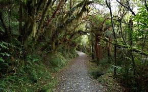 Картинка Осень, Лес, Дождь, Fall, Дорожка, Autumn, Rain Forest, Path