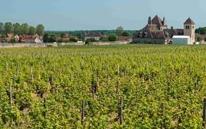 Картинка город, замок, Франция, виноградник, Бургундия